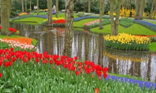 flower-garden-pond